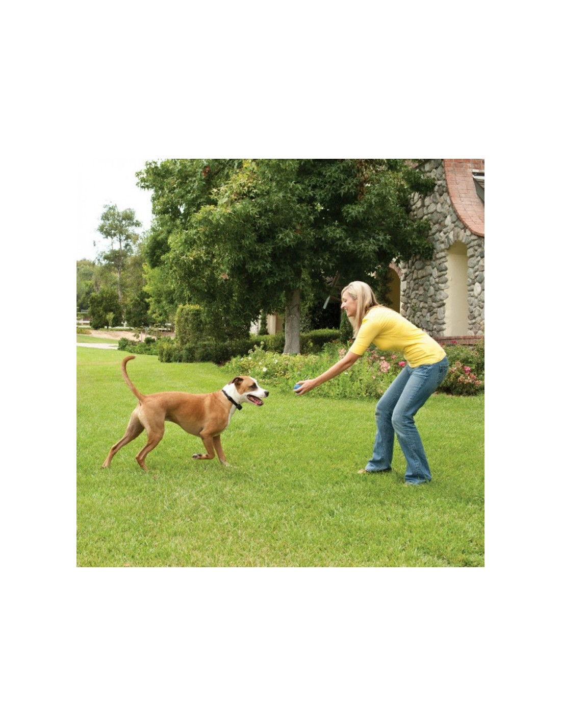 Petsafe Wireless Receiver Collar For Small Dogs