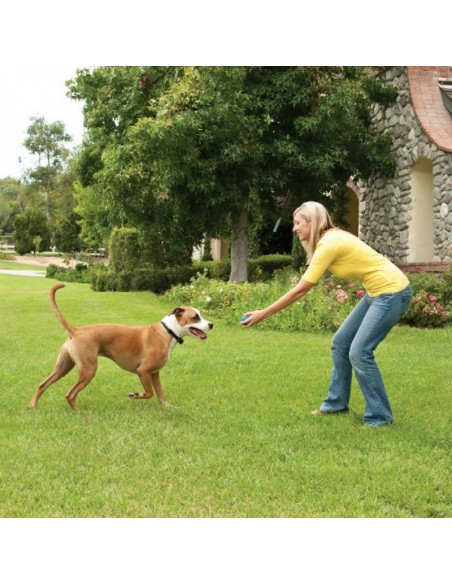 Stay and Play Wireless Fence™ System (PIF17-13478) - PetSafe® Ireland
